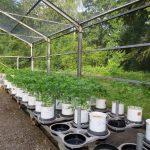 Projektstart: Biobasierte Dünger sollen künftig Mineraldünger ersetzen