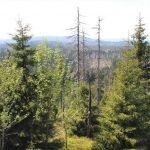 """Waldboden: Vom """"Waldsterben"""" in den 80ern zu den Waldschäden von heute?"""