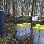 Zu viel Stickstoff bremst Waldwachstum in Europa