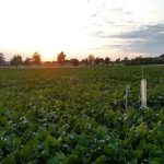 Welt-Umwelt-Tag am 5. Juni: Pflügen, Grubbern oder Direktsaat – Modell zur Veränderung der Bodenstruktur als wichtige Grundlagenforschung