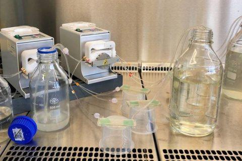 Pflanzenschutz: Kommunikation statt Giftkeule