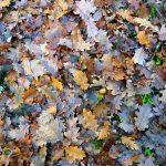 Bodenchemikalien hemmen Zersetzung von Pflanzenresten – durch Schädigung der Biodiversität