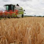 Bodentrockenheit – Deutscher Bauernverband legt Erntebilanz vor