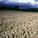 Landwirtschaft und Biodiversität brauchen gesunde Böden