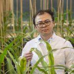 Bodenbakterien helfen Pflanzen, besser zu wachsen